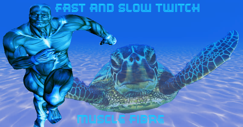 Fast and slow twitch