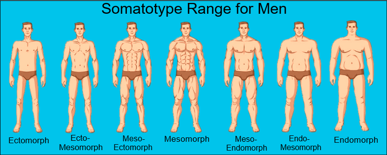 Male Somatotypes