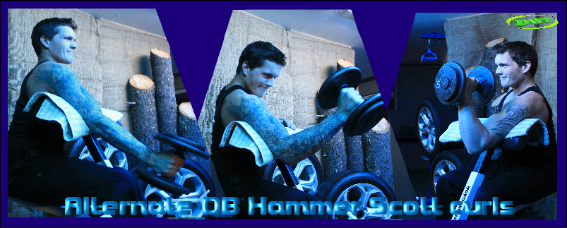DB Hammer Scott curls