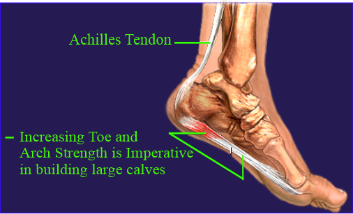 Toe and Arch conections