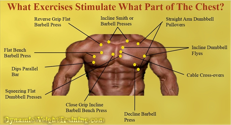 What exercises stimulate the chest