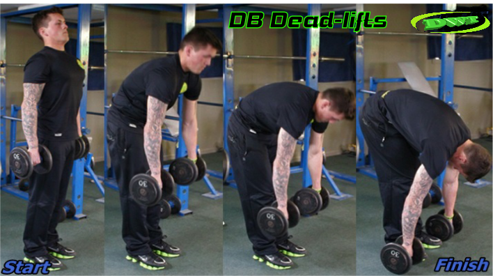 DB stiff legged deadlifts