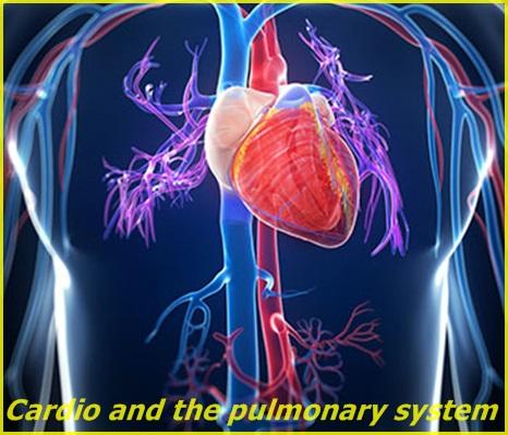 Cardio/pulmonary system