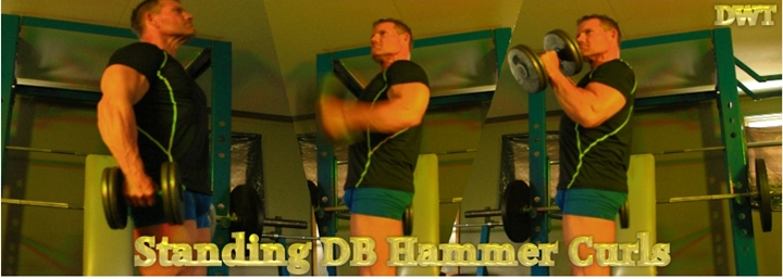 Intermediate hammer curls