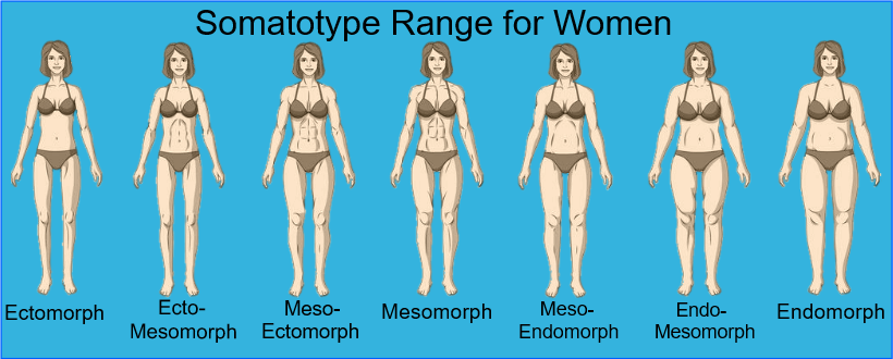 Female Somatotypes