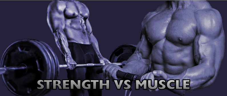 Strength VS Muscle