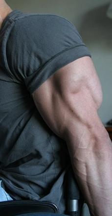 Triceps development